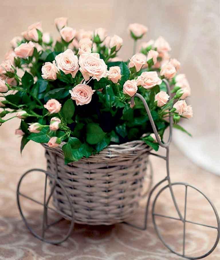 Panier vélo et bouquets de fleurs