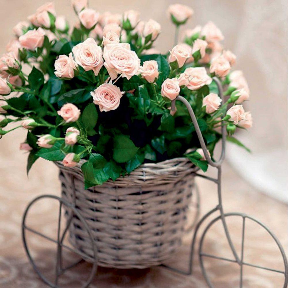 panier-velo-fleurs